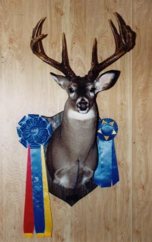 Award Winning Shoulder Mount Taxidermy at Moyer's Taxidermy